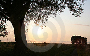 Tree Silhouettes Free Stock Images
