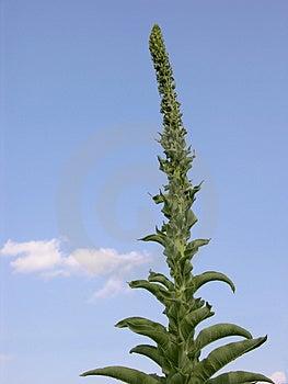 Planta en un cielo azul Foto de archivo