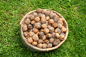 Basket With Walnuts Free Stock Images
