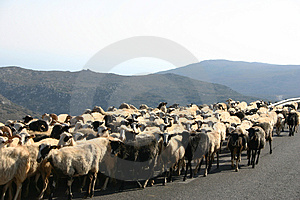 Crete / Sheep blockade Royalty Free Stock Photo