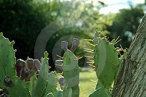Cactus 01 Images libres de droits