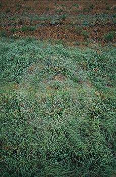 Grass Free Stock Image