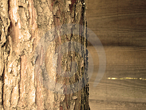 Close Up Of Tree Bark Free Stock Image