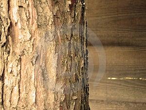 Close Up Of Tree Bark Free Stock Image