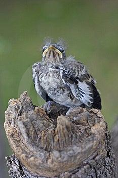 Bird On Tree Stump Head-0n Free Stock Photos