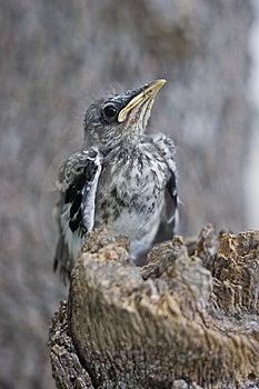 Pássaro em um coto que olha acima Imagens de Stock Royalty Free