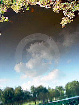 Clouds Reflected In The Pond Stock Image
