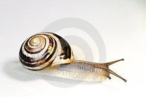 Snail Free Stock Photo