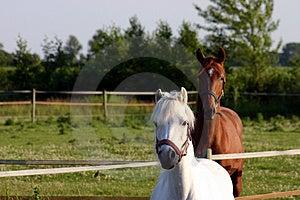 Raoul1 Free Stock Photos