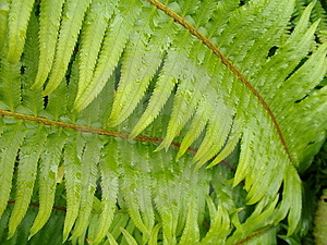 Green fern leaf with water droplets Stock Photo