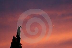Pájaro de Pleasanton en árbol durante puesta del sol Imagenes de archivo
