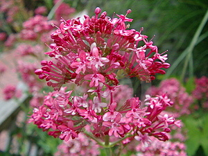 Flower Macro Royalty Free Stock Image