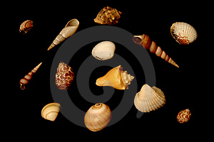 Isolated Seashells Stock Photography