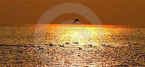 Seagulls Free Stock Photo