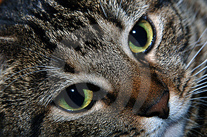 Visage d'un chat Photo stock