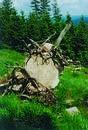 Mountain Stone Tree
