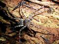Spider Stock Image