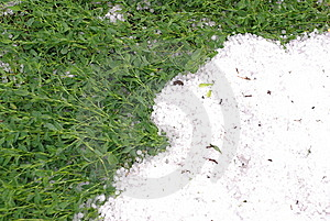Hail And Green Grass Royalty Free Stock Photos - Image: 14000448