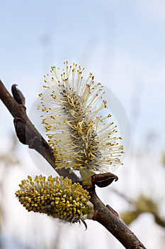 Spring Has Come To Moscow 3 Royalty Free Stock Photo - Image: 14000735