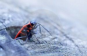 Red Bug Stock Photos - Image: 14003193
