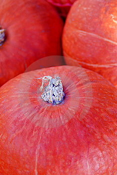 Pumpkin Royalty Free Stock Image - Image: 14003966