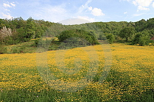 Yellow Flowers Stock Photography - Image: 14007302