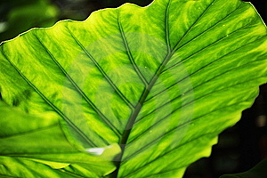Lush Green Leaves Stock Photo - Image: 14008110