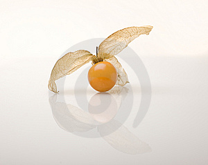 Cape Gooseberry (Physalis Peruviana) Stock Images - Image: 14010684
