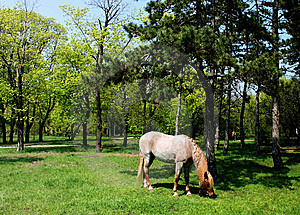 Horse Browse In Park Royalty Free Stock Photo - Image: 14010735