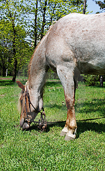Horse Browse Royalty Free Stock Image - Image: 14010776