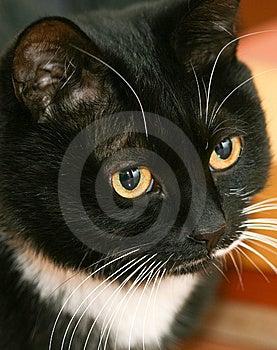 Cat Eyes Royalty Free Stock Photo - Image: 14024085