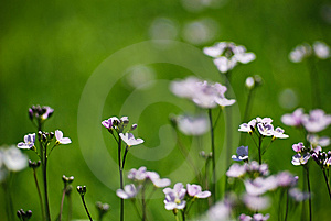 Some Flower Royalty Free Stock Image - Image: 14025486