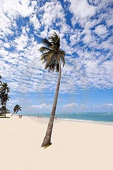 Exotic Beach Royalty Free Stock Image - Image: 14025856