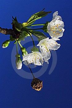 Regeneration Royalty Free Stock Image - Image: 14026006