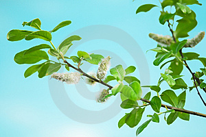 Green Brunch Royalty Free Stock Image - Image: 14026316