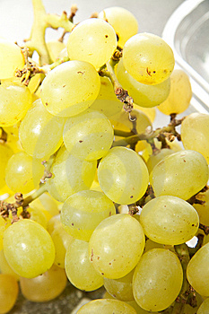 Grapes Royalty Free Stock Image - Image: 14027796