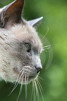 Grey Cat Profile Stock Photos - Image: 14028873