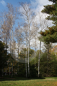 High Birches Stock Images - Image: 14030524