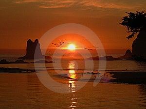 LaPush Coastline Stock Photography - Image: 14031372