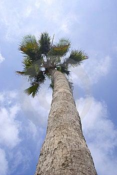 Palm Stock Photos - Image: 14031873