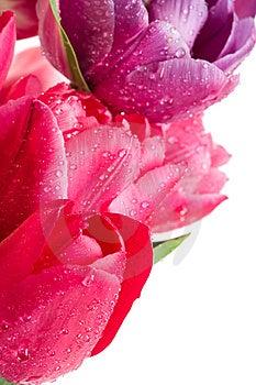 Tulips Stock Photo - Image: 14036250