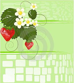 Strawberries Stock Image - Image: 14038071