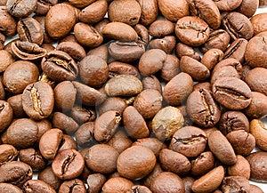 Coffee Grain Stock Image - Image: 14039321