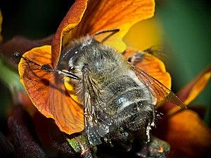 Bee Stock Image - Image: 14040431