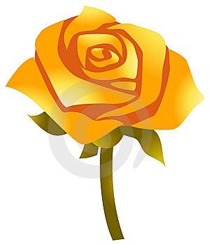 Yellow Flower Stock Image - Image: 14041271