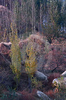 Autumn Woods Stock Photography - Image: 14041992