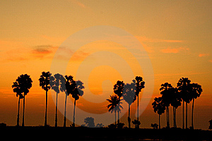 Sky Line And Palm Tree Royalty Free Stock Photography - Image: 14042427