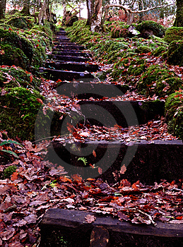 Autumn Steps Stock Photography - Image: 14046502