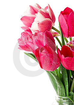 Tulips Royalty Free Stock Photos - Image: 14049258