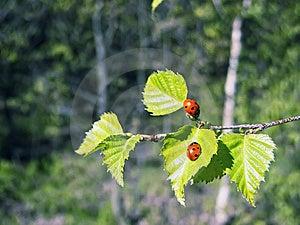Ladybug Stock Image - Image: 14053401
